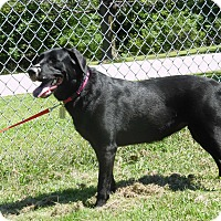 Adopt A Pet :: Norma - Lewisville, IN