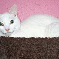 Adopt A Pet :: Giovanni - Santa Rosa, CA