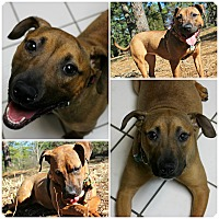 Adopt A Pet :: Tiana - Forked River, NJ