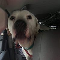 Adopt A Pet :: Hank - Staunton, VA