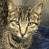Adopt A Pet :: FLEUR - Ocala, FL