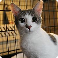Adopt A Pet :: Cosmo - Ortonville, MI