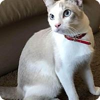 Adopt A Pet :: Charlie - Glendale, AZ