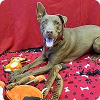 Adopt A Pet :: Duran - Chino Valley, AZ