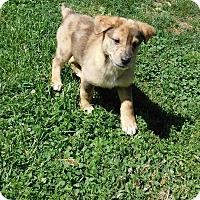 Adopt A Pet :: zane - Mooresville, IN