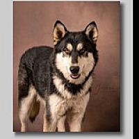 Adopt A Pet :: Tommy - Cedar Crest, NM