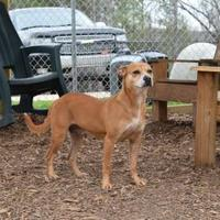 Adopt A Pet :: Sasha - Anniston, AL