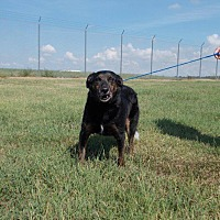 Adopt A Pet :: Dini - Pittsburg, KS