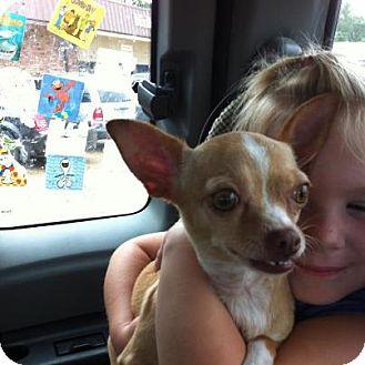 Chihuahua Mix Dog for adoption in Vidor, Texas - Chi-Chi