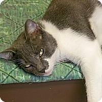 Adopt A Pet :: Cosmo - Secaucus, NJ