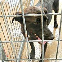 Adopt A Pet :: Sonny - McKinney, TX