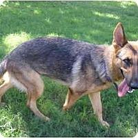 Adopt A Pet :: Raja - Green Cove Springs, FL