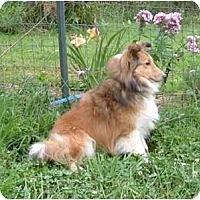 Adopt A Pet :: Leah - Indiana, IN