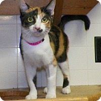 Adopt A Pet :: Secret - Dover, OH