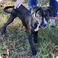 Adopt A Pet :: Sammy - Livingston, TX