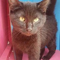 Adopt A Pet :: CLYDE - Ocala, FL