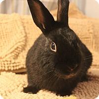 Adopt A Pet :: Bart - Hillside, NJ