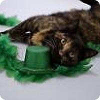 Adopt A Pet :: Leia - Jefferson, NC