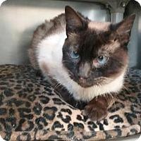 Adopt A Pet :: LaLa - Jackson, NJ
