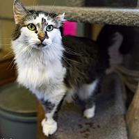 Adopt A Pet :: Pretty - Pompton Plains, NJ