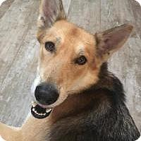 Adopt A Pet :: Sadie - New Smyrna Beach, FL