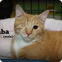 Adopt A Pet :: Simba - Springfield, PA