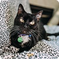 Adopt A Pet :: Scrappy Kendrick - Edmonton, AB