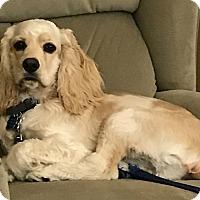 Adopt A Pet :: Jesse James - Sugarland, TX