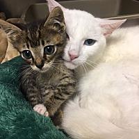 Adopt A Pet :: HENRY - Fairfield, CT