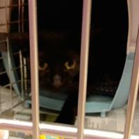Adopt A Pet :: Mina - Myrtle Beach, SC