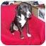 Photo 3 - Beagle Mix Dog for adoption in Anna, Illinois - ELLIE