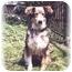 Photo 4 - Border Collie/German Shepherd Dog Mix Dog for adoption in Baldwin, New York - Phoenix