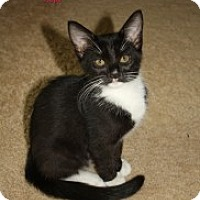 Adopt A Pet :: Hope - justin, TX