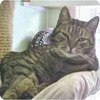 Adopt A Pet :: Carter - Lunenburg, MA