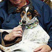 Adopt A Pet :: Ducky - Pocahontas, AR