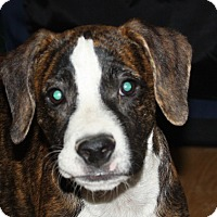 Adopt A Pet :: Hutch - PENDING, in Maine - kennebunkport, ME