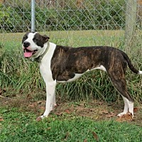 Adopt A Pet :: Bessie - Pleasant Plain, OH