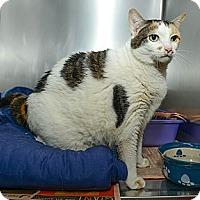 Adopt A Pet :: Zazu - New York, NY