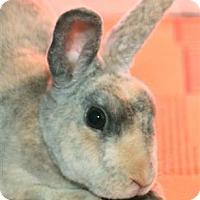 Adopt A Pet :: Bugs - Williston, FL