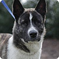 Adopt A Pet :: Tora - Virginia Beach, VA