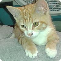Adopt A Pet :: Misty - Whittier, CA