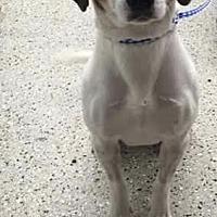 Adopt A Pet :: Jimmy - Savannah, GA
