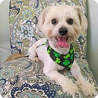 Adopt A Pet :: Roscoe - Lawrenceville, GA