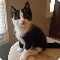Adopt A Pet :: Hinckley - Richmond Hill, ON