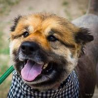 Adopt A Pet :: Fella 02-04-13 - Bulverde, TX