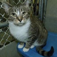 Adopt A Pet :: Lola - Meadow Lake, SK