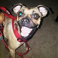 Adopt A Pet :: Zena - needs foster - Evergreen, CO