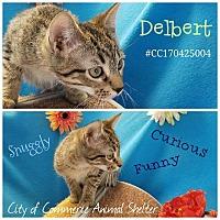 Adopt A Pet :: Delbert - Commerce, TX