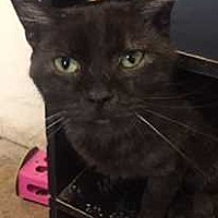 Adopt A Pet :: Forrest - Fort Madison, IA