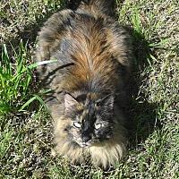 Adopt A Pet :: Trixie [CP] - Oakland, CA